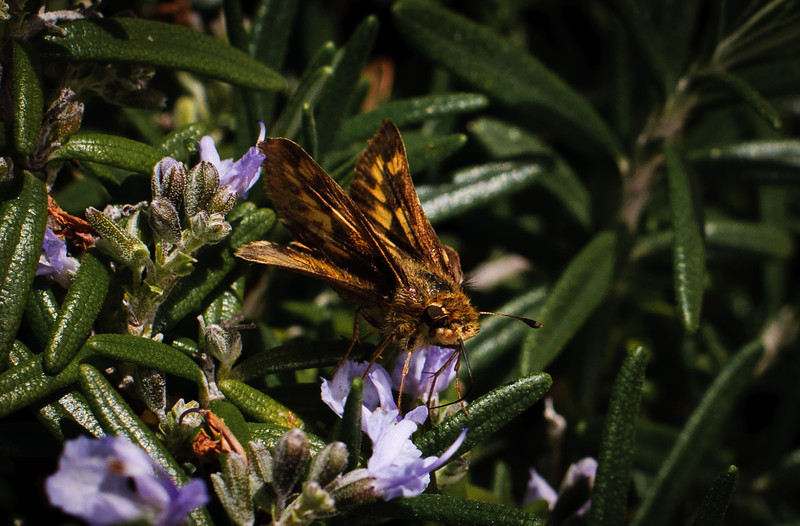 moth-6956.jpg