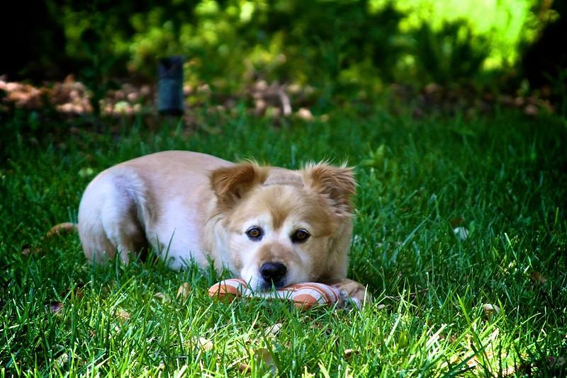 2011-06-19-0001-460 Van Buren-Leo.jpg
