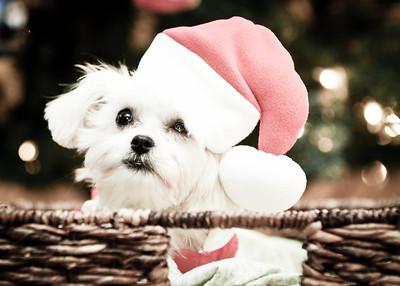 Kampwerth 'Hello Holidays!' 11.17.13