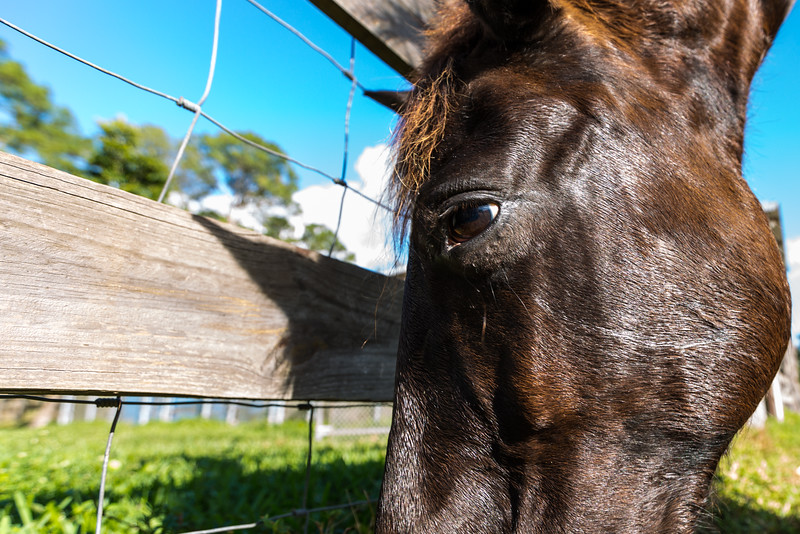 Playing around with a super wide angle (16-35mm) for some more interesting images with Phoenix, the Appy - Paso. Sunday, December 18, 2016(Joseph Forzano / Deep Creek Films & Photography)