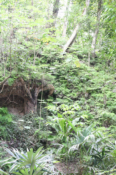 Guatemala Tikal 0 083.JPG