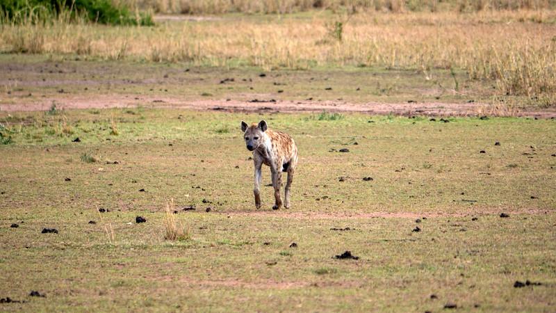 Tanzania-Serengeti-National-Park-Safari-Hyena-01.jpg