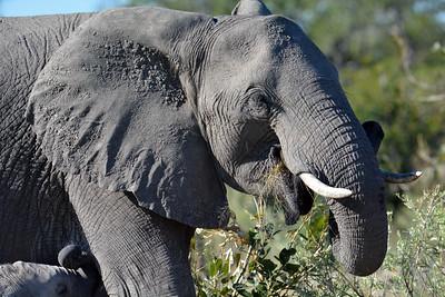 Botswana: Okavango: Moremi Game Reserve: B Afternoon 2019