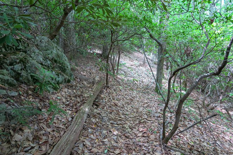 Green Mountain Trail -- 4,600'