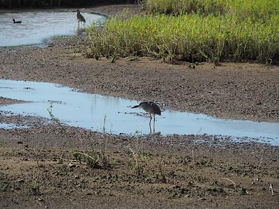 17-048 Kealia Pond NWR Maui 22 Feb Susan