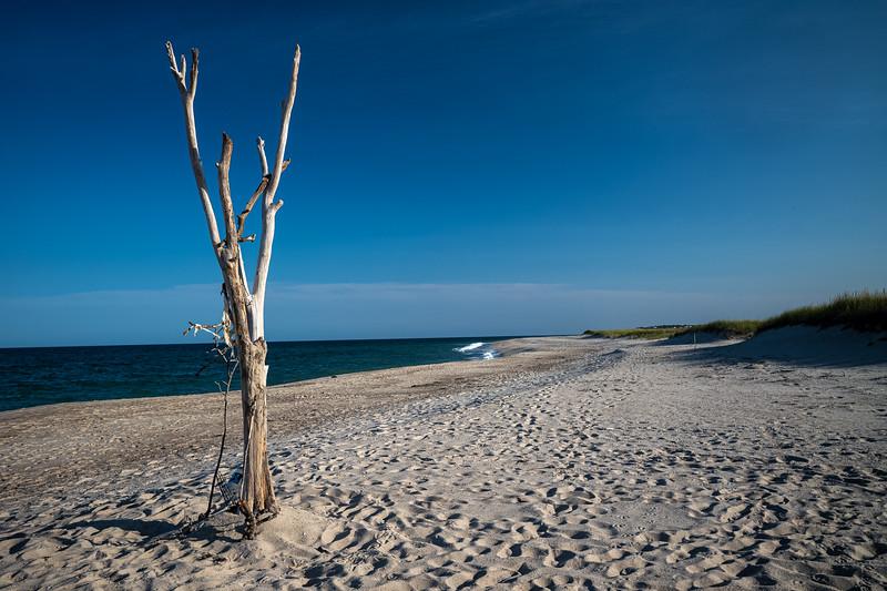 vertical driftwood on Nauset Beach.jpg