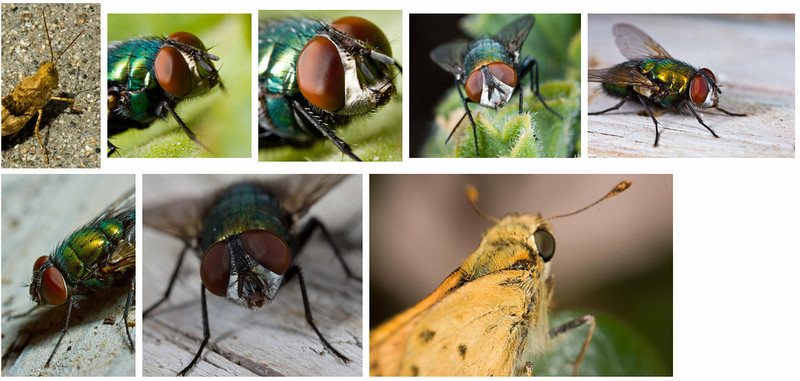 Insects! - a set on Flickr.jpg