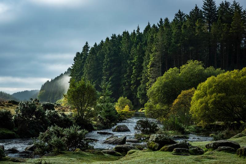 Bellever Forest