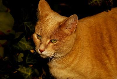 Cat Portraiture