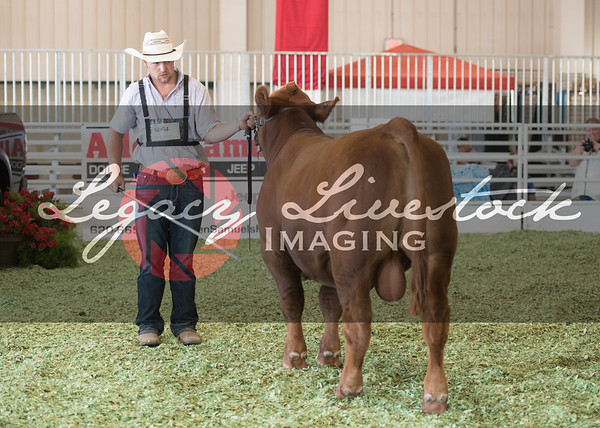 Open Cattle Shows