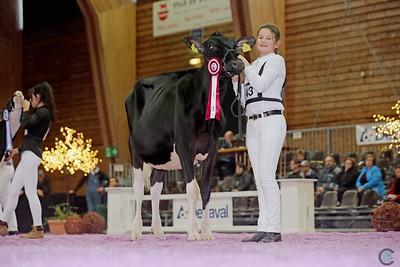 Junior Holstein Classes