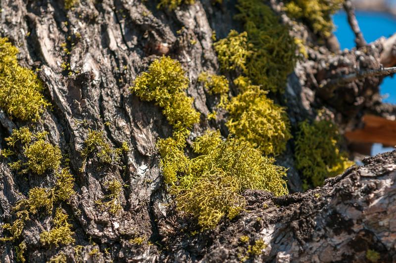 Lake-Butte-6.jpg