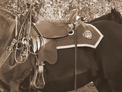 2009 Folsom Equine Challenge