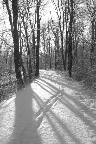 Snowy Path 3 bw.jpg