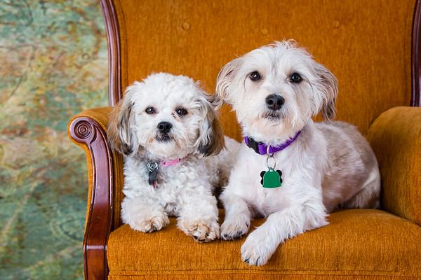 Tuxedo Bark Club-Millie & Lady