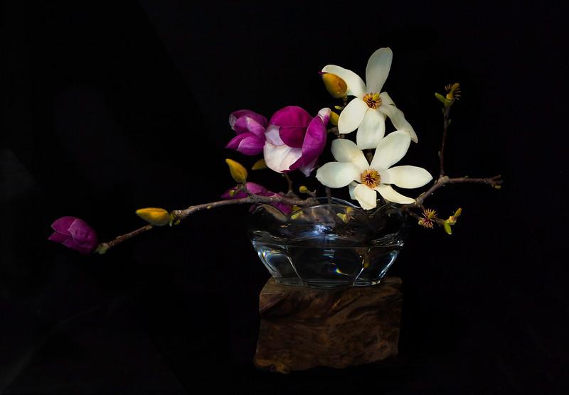 MagnoliaInVase.jpg
