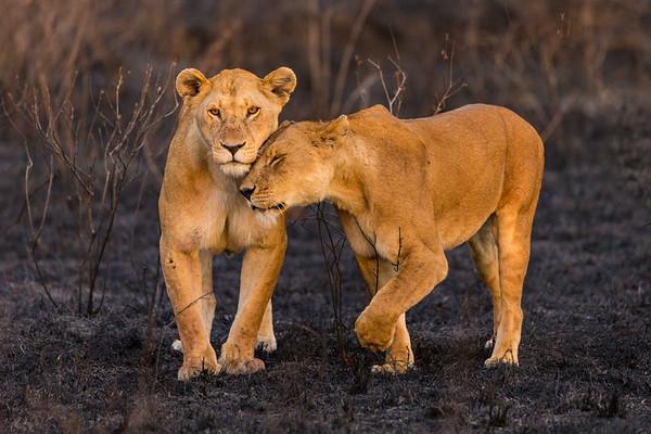 Kenya&Tanzania