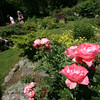 Seaside Gardens Tour 2009: Garden of Eileen Smith on Marmion Way in Rockport. This property features a mature garden developed over 30 years featuring many perennials, roses and a pond filled with Japanese Koi. Photo by Mary Muckenhoupt