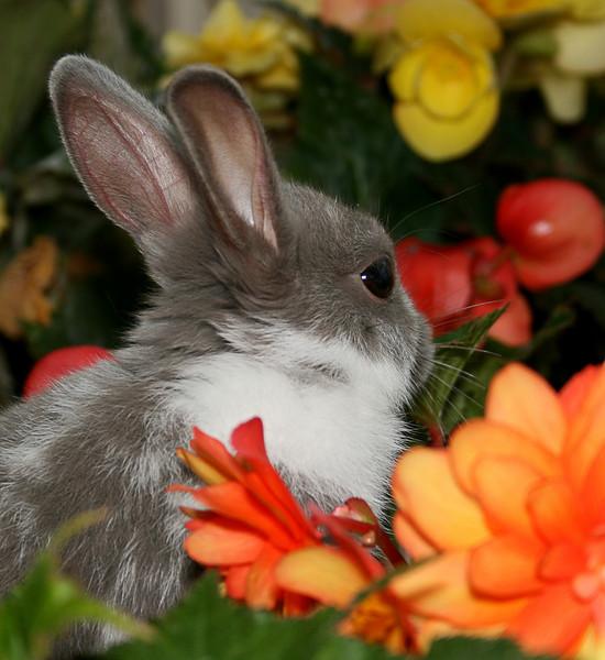 Bunny5.jpg