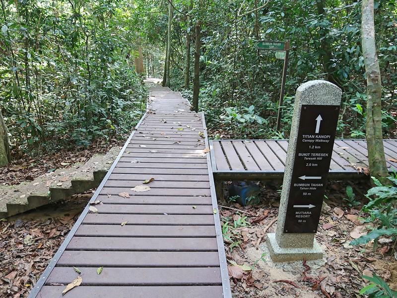 IMG_5263-marked-walking-paths.jpg