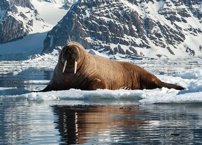 Svalbard Norway - 2 of 2