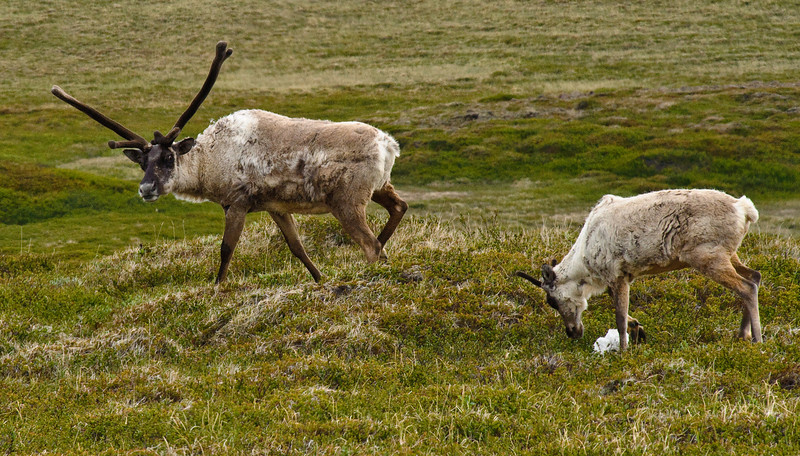Iceland 2009 Day 8: Lagarfljót to Mývatn