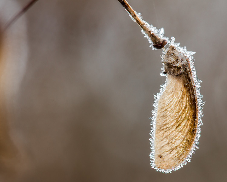 Frosty Wing