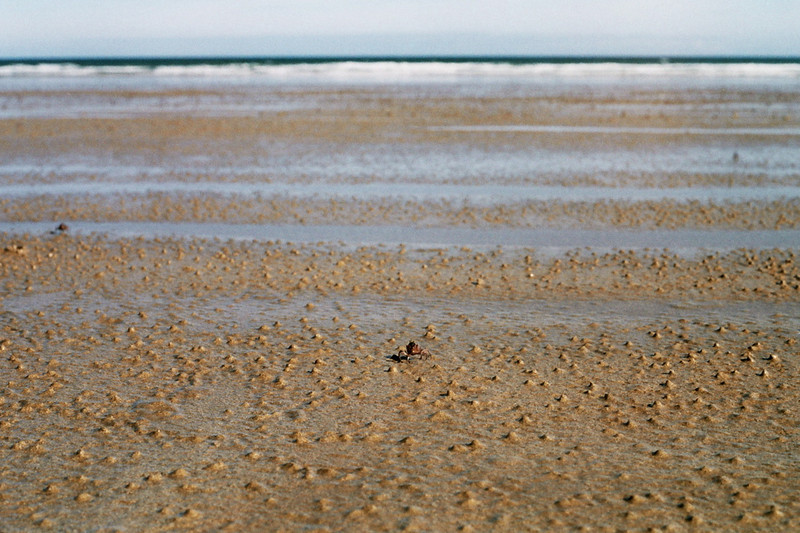 Narawtapu - Bakers Beach - Soldier crab
