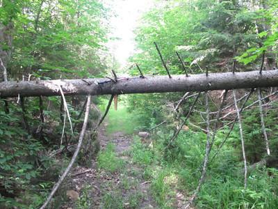 Cardigan Skyland Trail 2011-0702