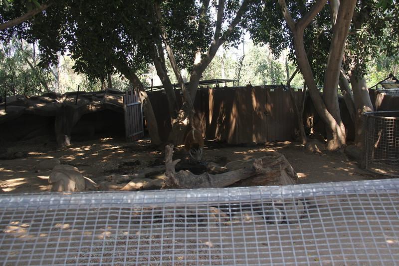 20170807-042 - San Diego Zoo.JPG