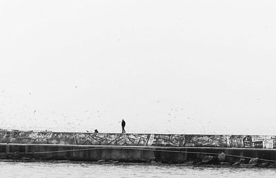 Seagulls in the Fog of Propontis