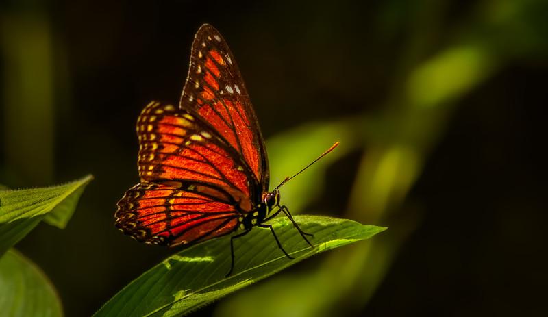Butterflies-012.jpg