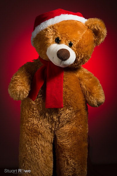 Teddy-180306-1.jpg