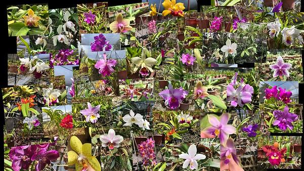 Jenny's Orchid Garden