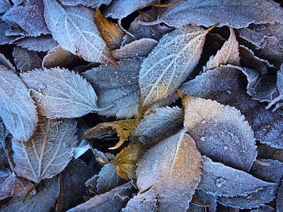 Bellezas anodinas: hojas