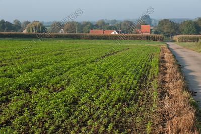 fields velden champs