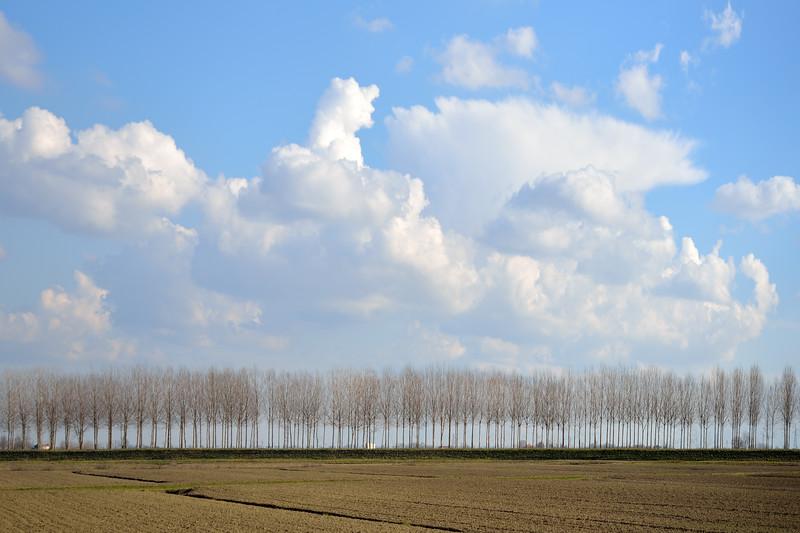 Poplars - Sant'Agata Bolognese, Bologna, Italy - February 8, 2013