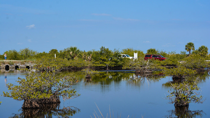 Cars parked along road in mangrove swamp