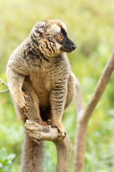 Madagascar_2013_IG3A2375.jpg