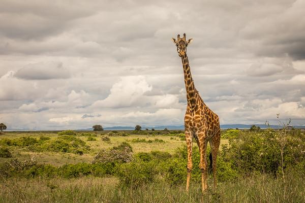 May 2019 Nairobi National Park