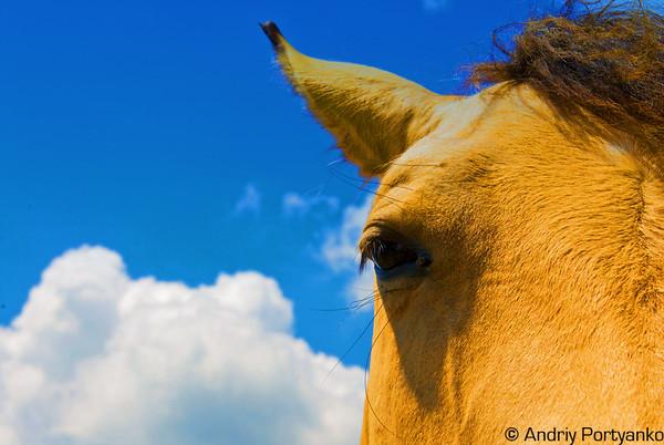 575513018_horses10 copy.jpg