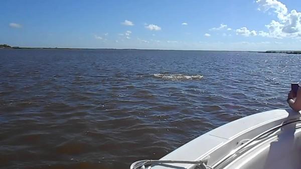 Jekyll Island Boat Tours Dolphin Daze Dolphin Videos 07-20-20