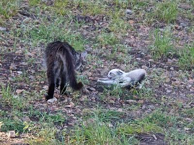 A Scary Kitten Encounter