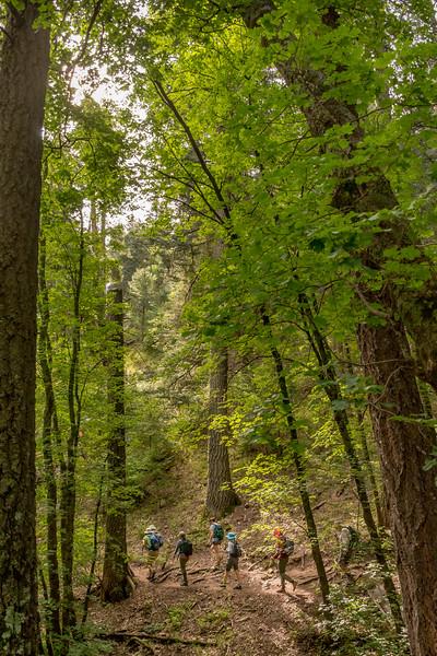 Mt Lemmon Old Growth #6