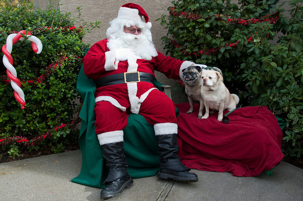 Ruby, Louie, and Spike with Santa 2010
