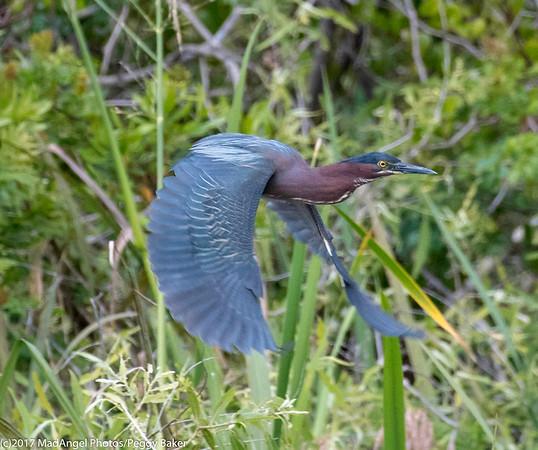 day 4 So FL Birding-252
