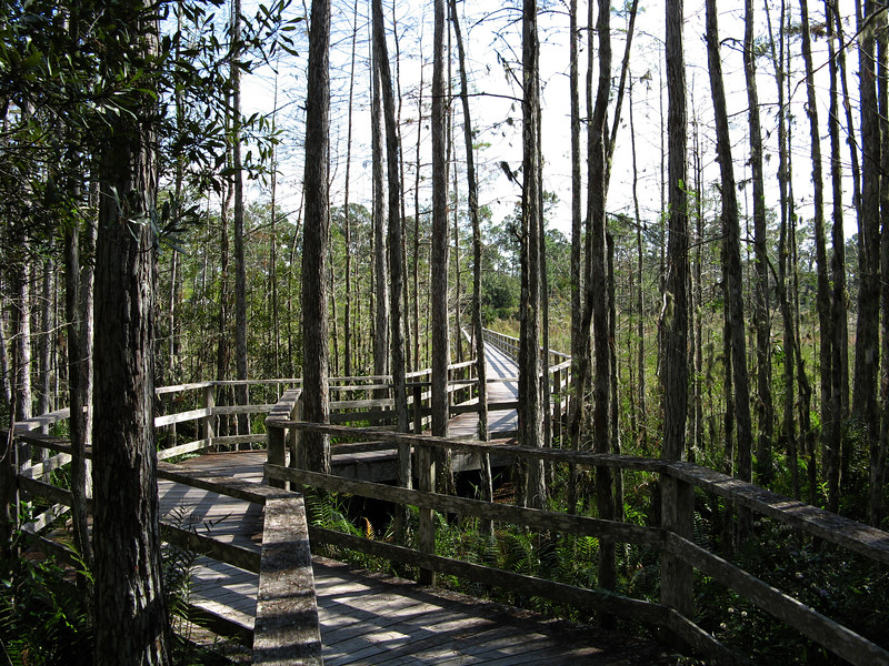 Corkscrew Sanctuary walkway