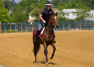 2019-06-02 Canter for the Cause