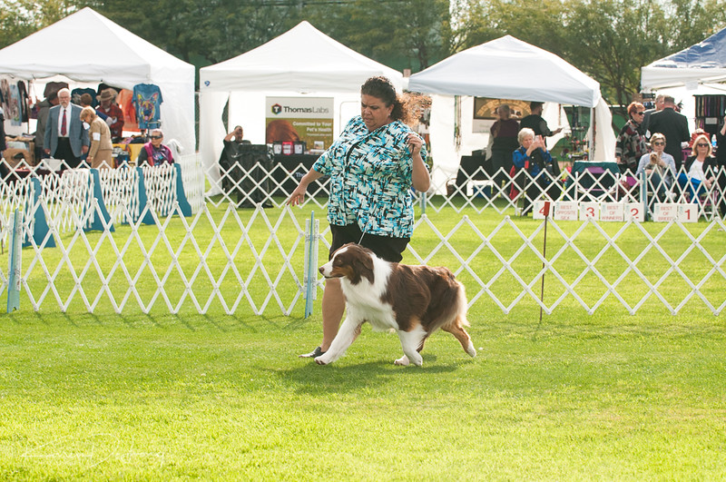 20170114_Kachina Kennel Club_Aussies-42.jpg