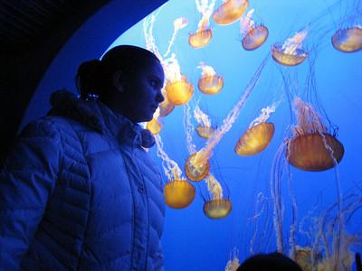 Monterey Bay Aquarium 12/27/10